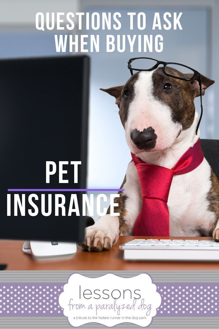 Having Pet Insurance Can Be The Best Decision You Ve Ever Made When A Devastating Accident Or Illness Str Pet Insurance Pet Insurance Dogs Pet Health Insurance