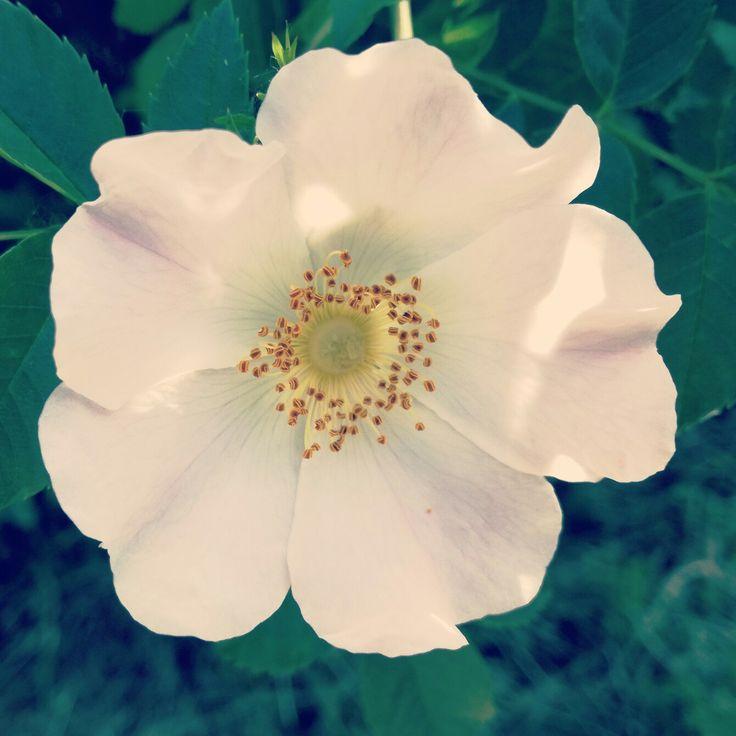 #flower #nature #mothernature #mothernaturelove #mothernaturelover #colour #summer #happiness