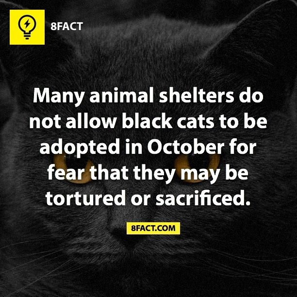 "Aw! Thank cats! I thought it was going to be either ""many animal shelters don't allow black cats to be adopted in October in fear of people suffering because of the evil black cats bring"" or ""Many animal shelters kill black cats..."" Keep surviving lil black kitties and thank you to those animal shelters who stop from REAL evil from being produced!"