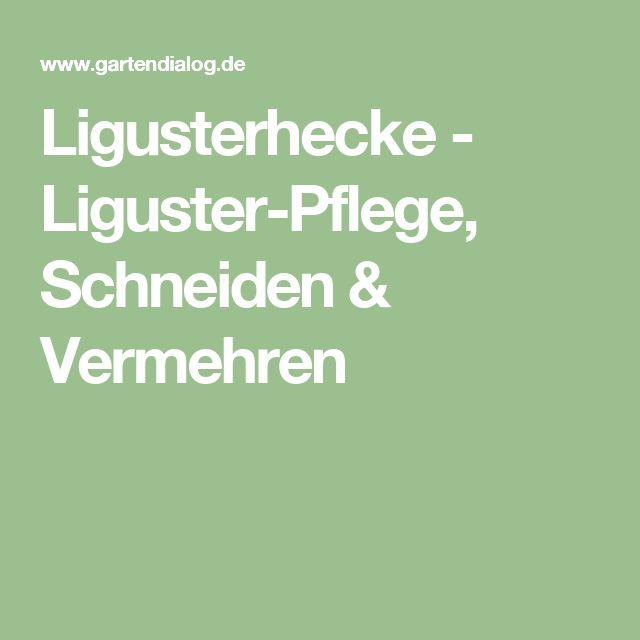 Ligusterhecke - Liguster-Pflege, Schneiden & Vermehren