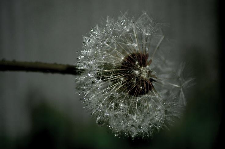 my photo..waterdrops