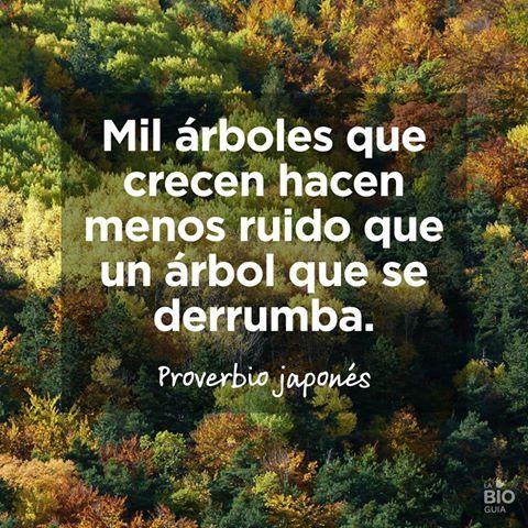 ❝ #FRASES - Mil árboles que crecen hacen menos ruido que un árbol que... ❞ ↪ Vía: proZesa