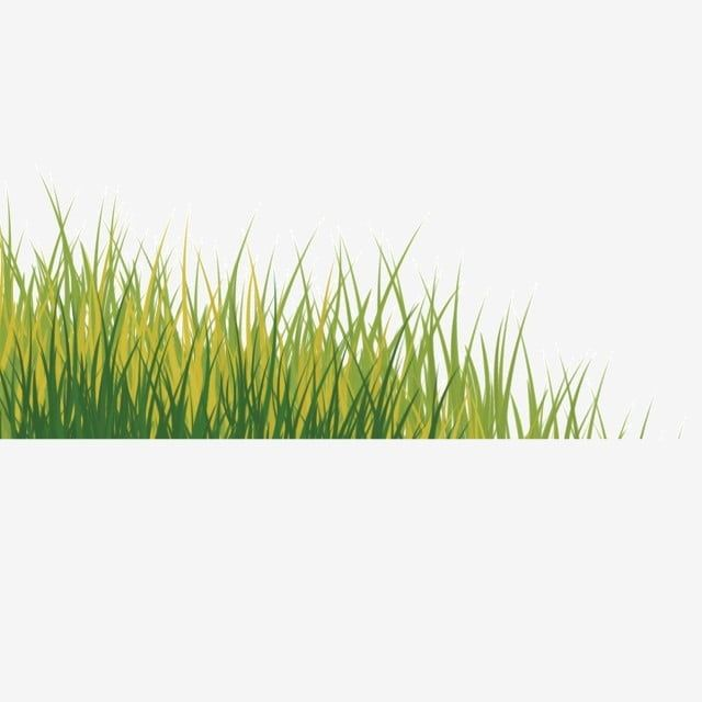 Planta Vegetacion Verde Maleza Imagenes Predisenadas De Hierba Planta Vegetacion Png Y Psd Para Descargar Gratis Pngtree Maleza Plantas Vegetacion