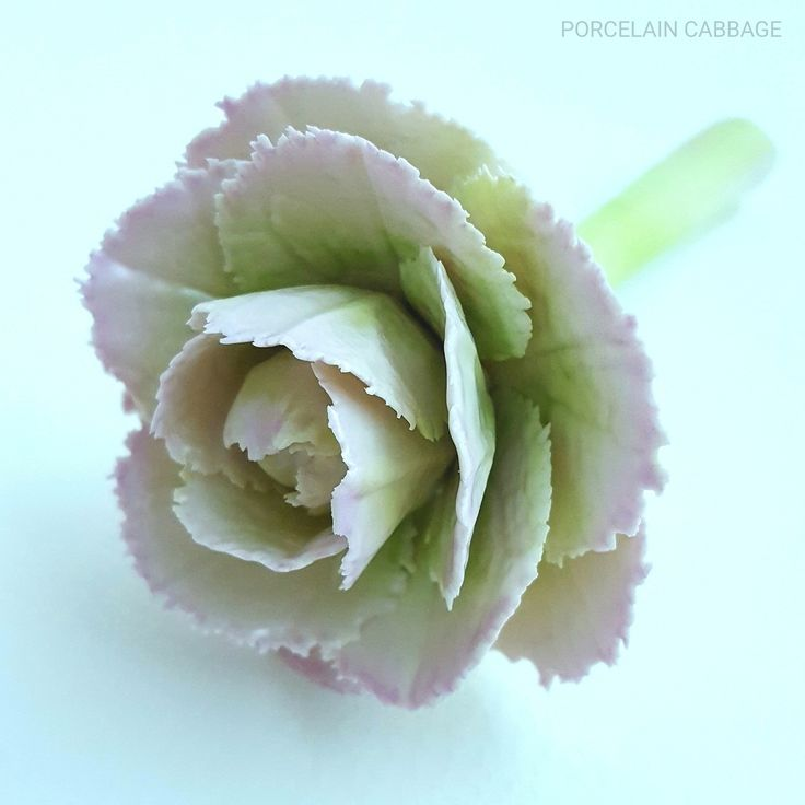 Porcelain cabbage. Inspired by the works #dodiethayer 💓💓💓 #porcelain #porcelainflowers #flowers…»