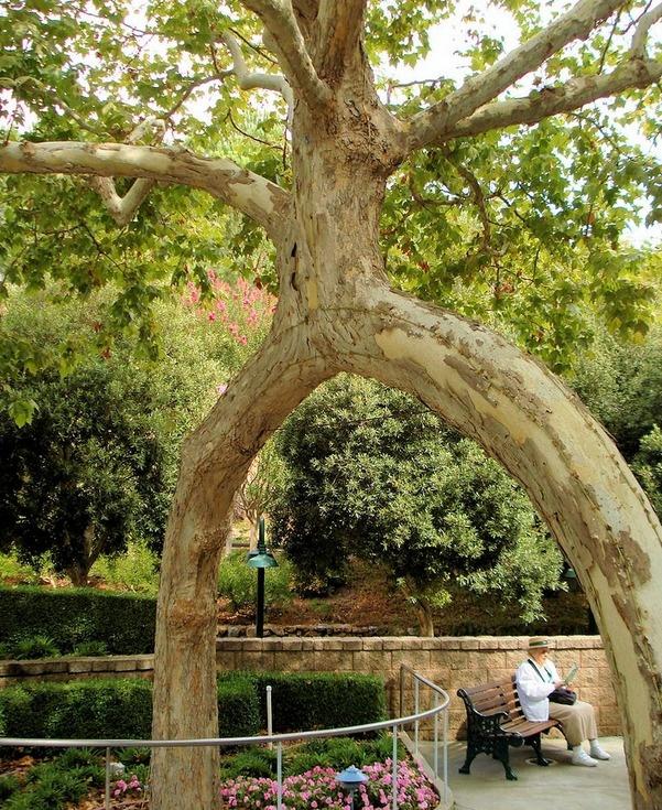Gilroy gardens beautiful trees pinterest for Gilroy garden trees
