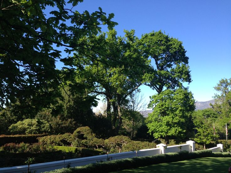 Everything here is so wonderfully lush and green after the winter rains in Cape Town