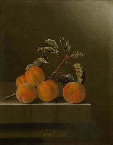 Adriaen Coorte (Dutch, c. 1665 – after 1707) - Still life with five apricots, 1704 - Oil on board