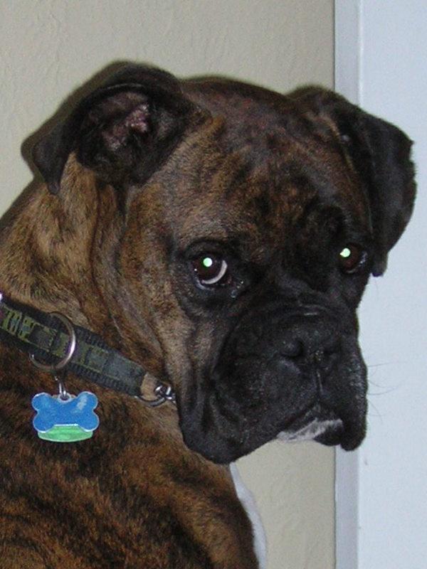 Indiana Looks like our wonderful dog Hershey. So similar