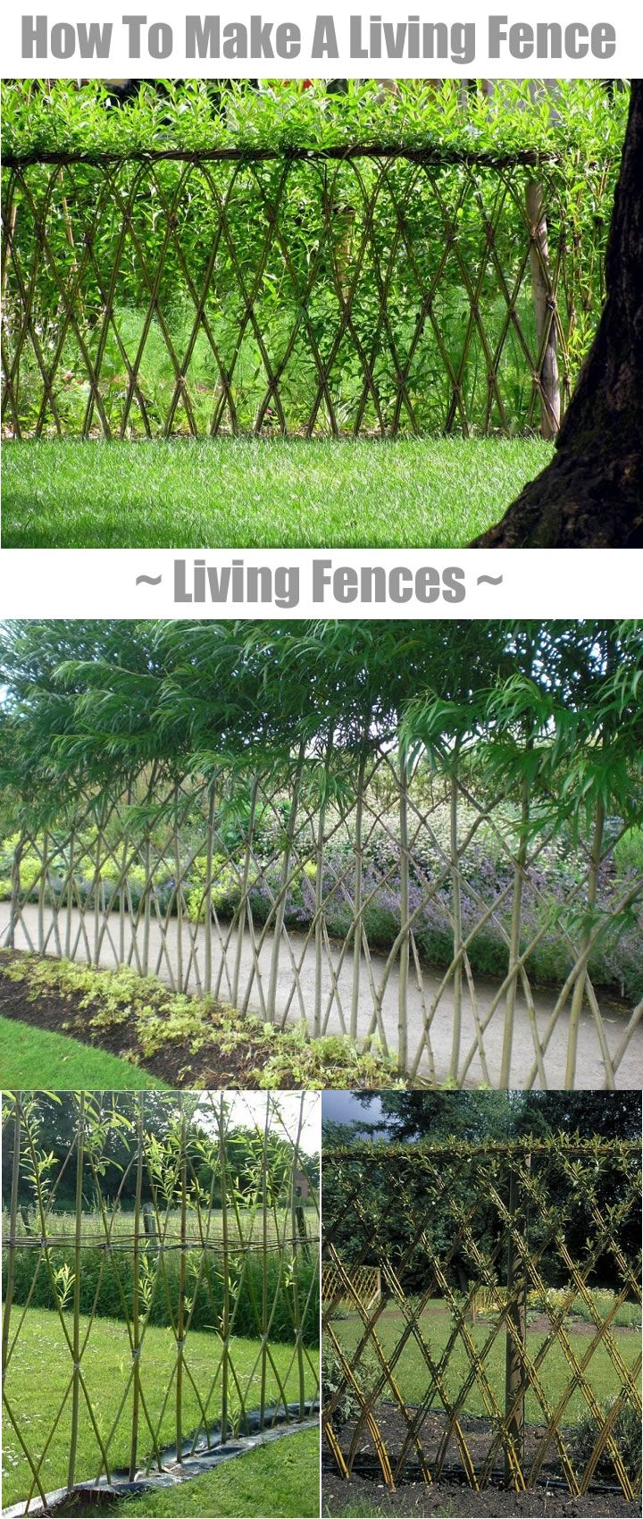 Living Fences - How To Make A Living Fence For Your Garden... | http://www.ecosnippets.com/diy/how-to-make-a-living-fence/
