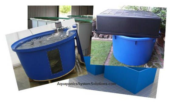 17 best images about aquaponics on pinterest greenhouses for Aquaponics fish for sale