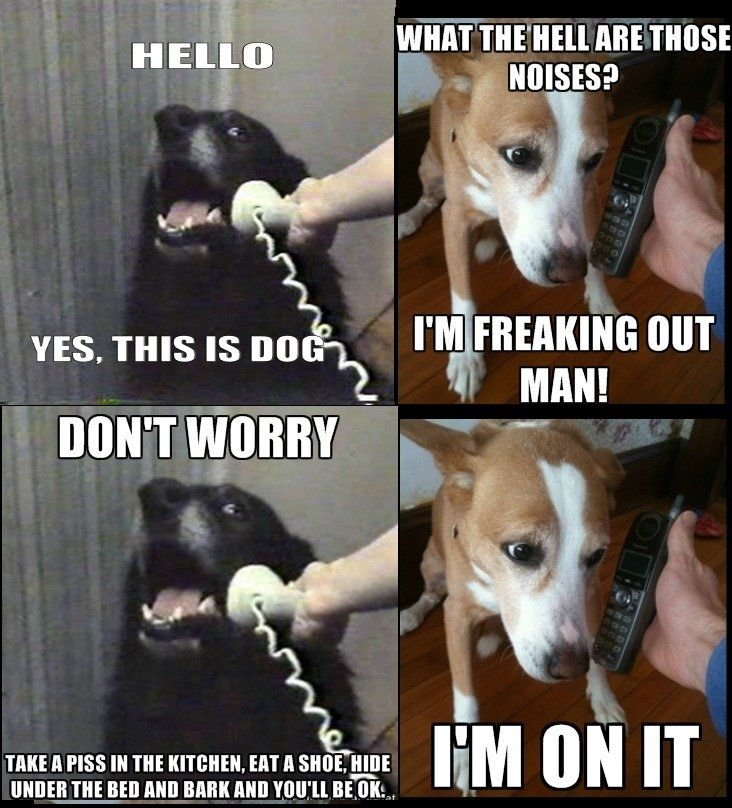 Dog: Dogs Pet, Funny Dogs, Funny Pictures, Pet Funny, Doggies Advice, Dogs Pictures, Funniest Pictures, 4Th Of July Memes, Funny Pet