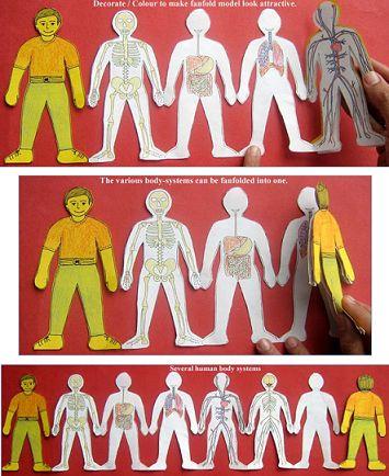 Miniatlas del cuerpo humano Ahora ya sabemos que el alma es el cuerpo y el cuerpo el alma. Nos dicen que son diferentes porque quieren persuadirnos de que podemos quedarnos con nuestras almas si los dejamos esclavizar nuestros cuerpos. George Bernard Shaw Podríamos decir que todos los temas de aprendizaje escolar son complicados para los …
