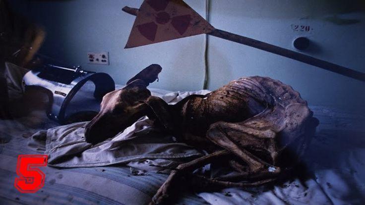5 foto da incubo di chernobyl foto spaventose chernobyl foto animali mutanti foto elephant foot foto terrificanti zona di alienazione L'incubo continua con P...