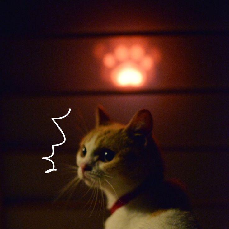 にゃらん @nyalan_jalan  8月19日 にゃ〜!でた〜!! にくきゅう火の玉!!!!