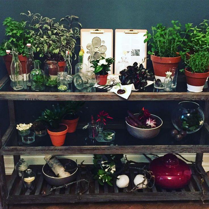 neue pflanzentrends bestaunen ich brauche platz f r ein. Black Bedroom Furniture Sets. Home Design Ideas