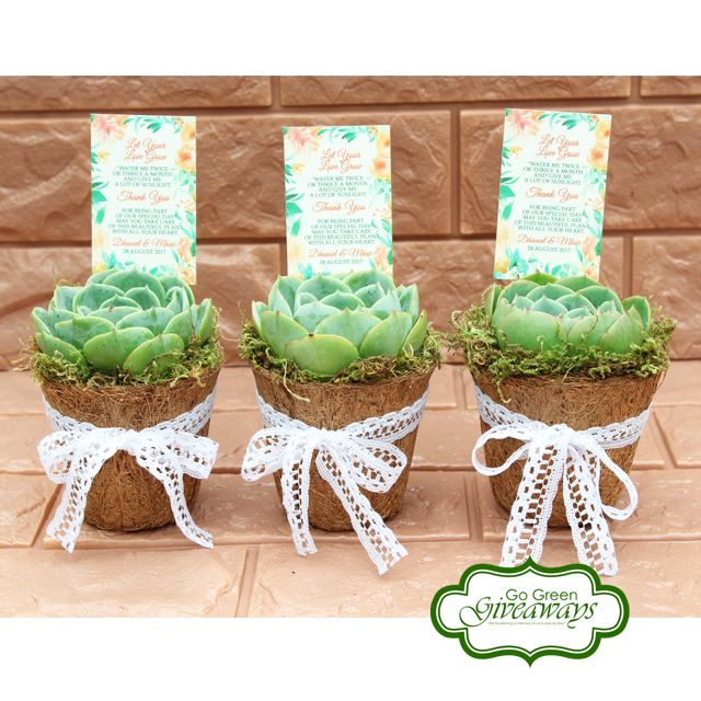 Wedding Theme Ideas Philippines: Succulents Birthday Giveaways, Succulents, Philippine