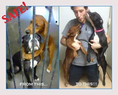 L'abbraccio di due cani commuove il web e li salva dall'eutanasia