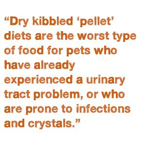 Natural Cat Food For Urinary Problems