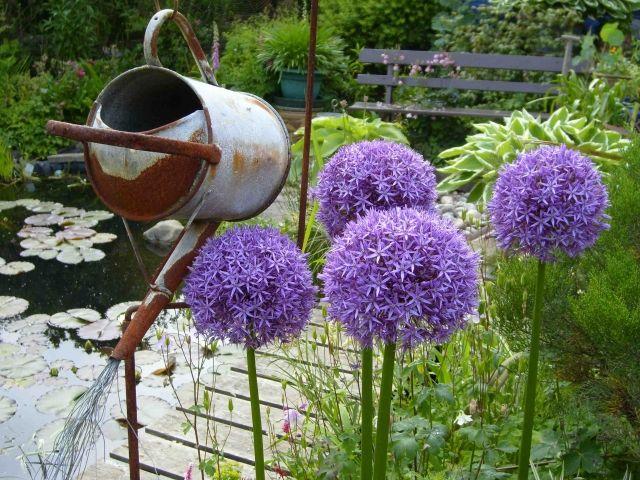 Cottage Garten Blumen Deko Gartengestaltung Zierzwiebel Exotische Blumen Taglilien Gartengestaltung