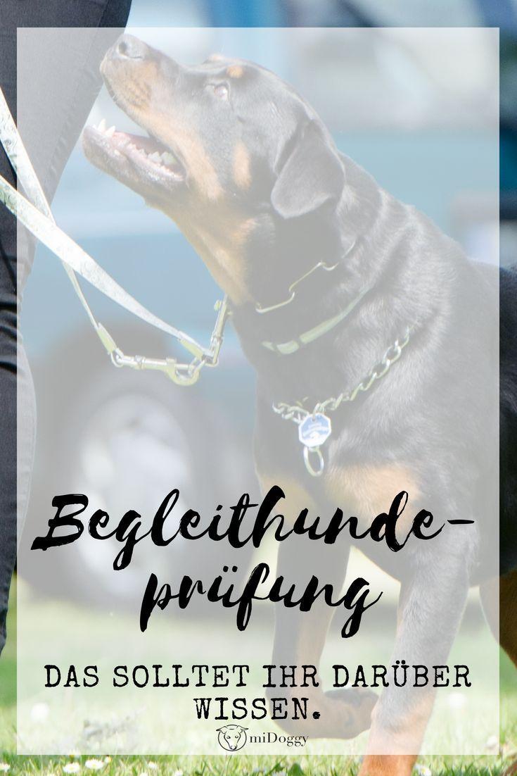 Begleithundeprufung Die Basics Fur Den Hundesport Inkl Checkliste Hundesport Hunde Hunde Tricks Beibringen