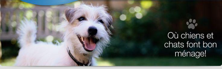J'adore voir les animaux qui sont heureuse! J'ai un chien chez moi, et il fait vraiment un parti de la famille. C'est pour ça que c'est tellement importante de lui prendre chez les vetrinaire qui sont honnetes et donnent les animaux le soin dont ils ont besoin.
