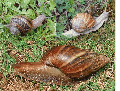 17 Best Images About Snails On Pinterest Deep Sea Slug