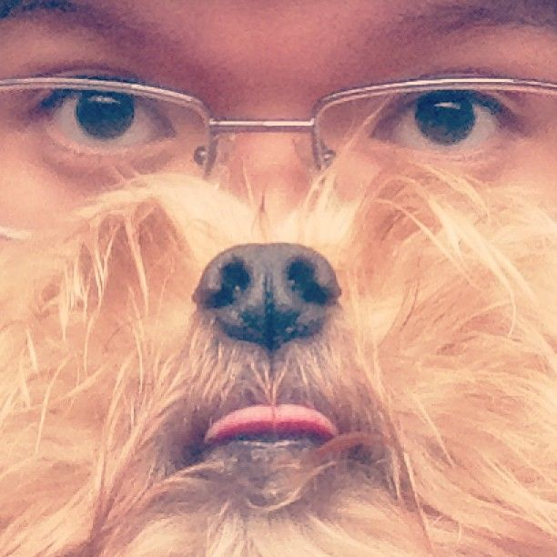 'Dog Beards', The Canine Equivalent Of The 'Cat Beards' Meme - DesignTAXI.com