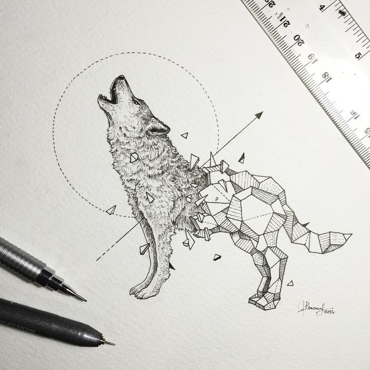 Artist Creates Extraordinary Geometric Animal Illustrations ~ Creative Market Blog