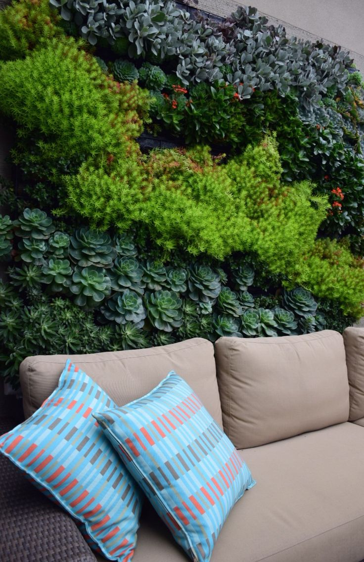 Botanical Space - Landscape Design & Construction - Melbourne Australia - A healthy succulent garden on a rooftop here in melbourne - This photo is only 4 months after being planted out - excellent growth - 2m x 2m