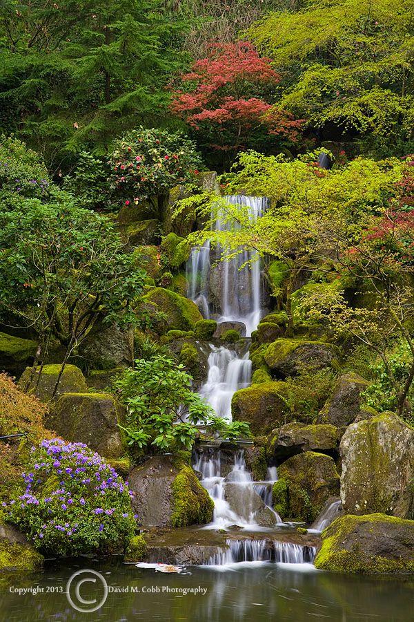 19 Best Summer In The Garden Images On Pinterest Japanese Gardens Portland Oregon And Portland