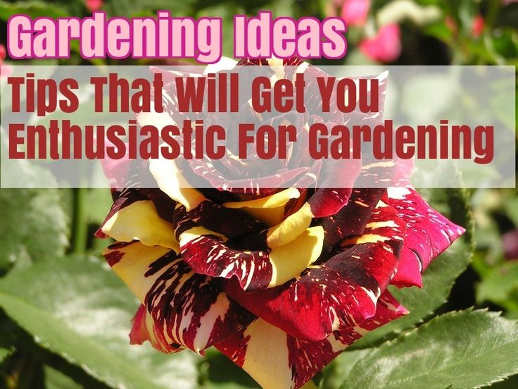 Great Organic Gardening Tricks From The Pros