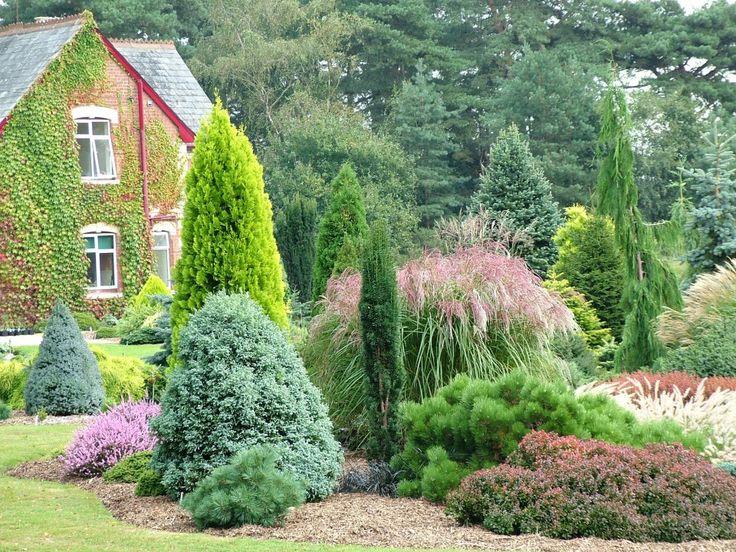 Foxhollow garden conifers pinterest gardens for Coniferas de jardin