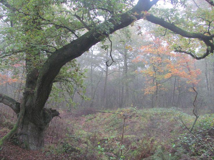 Tot de beroemdste bomen van ons land behoren de Wodanseiken van Wolfheze. Hun naam werd rond 1850 bedacht door de gebroeders Gerard en Johannes Warnardus Bilders, initiators van de zogenaamde Oosterbeekse School van landschapsschilders.Deze groep kunstenaars had een sterk  romantische kijk op het landschap. Meer info: http://www.bomeninfo.nl/wodanseiken.htm