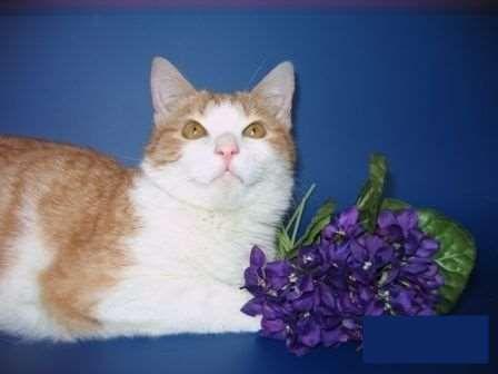 Отдам котенка в хорошие руки, город Санкт-Петербург