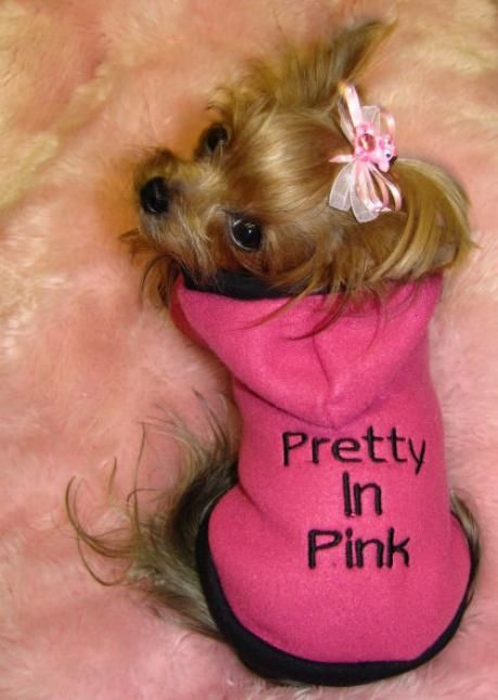 PRETTY IN PINK - Tap the pin for the most adorable pawtastic fur baby apparel! You'll love the dog clothes and cat clothes! <3