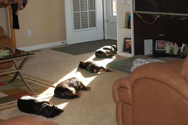 that's what my kitty does..Lights, Cat, Funny Dogs, Sun Ray, Pets, House, Sunlight, So Funny, Animal