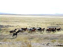 MUSTANG - Wikipedia >>>>  More than half of all mustangs in North America are found in Nevada (which features the horses on its State Quarter), with other significant populations in California, Oregon, Utah, Montana, and Wyoming Another 34,000 horses are in holding facilities.
