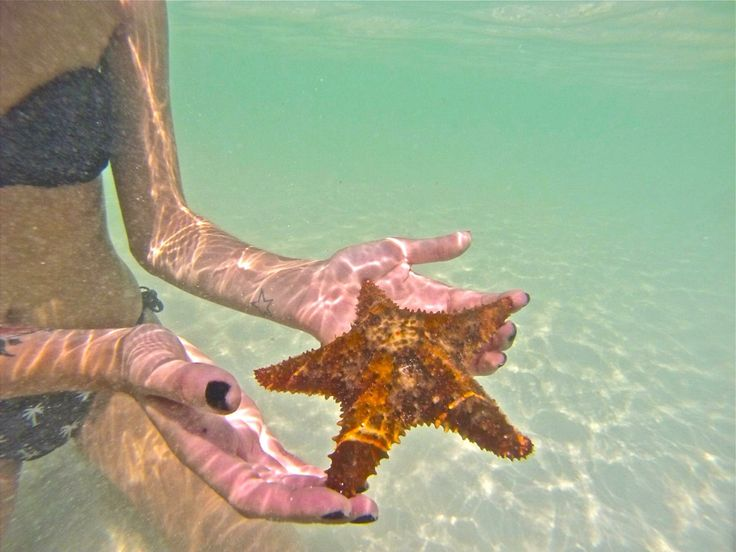 Cuba 2014 starfish