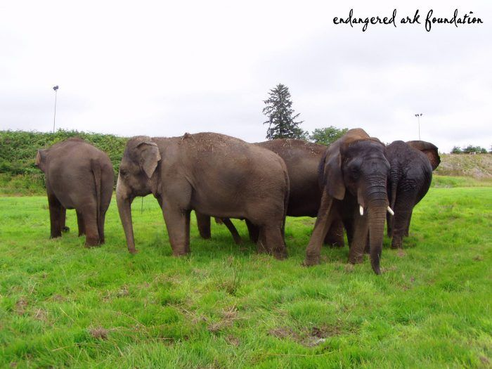 You'll Never Forget A Visit To This One Of A Kind Elephant Ranch In Oklahoma.