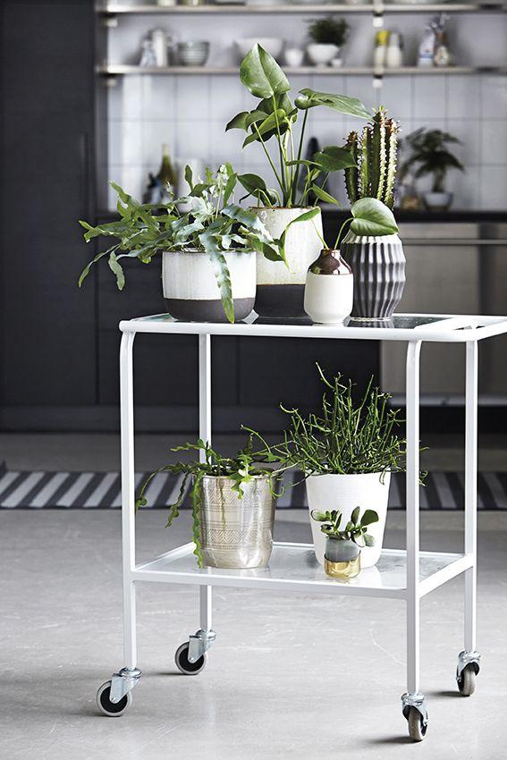 Trend: groepjescultuur. Planten, fotolijsten, posters, lampen: more is more en less is less.