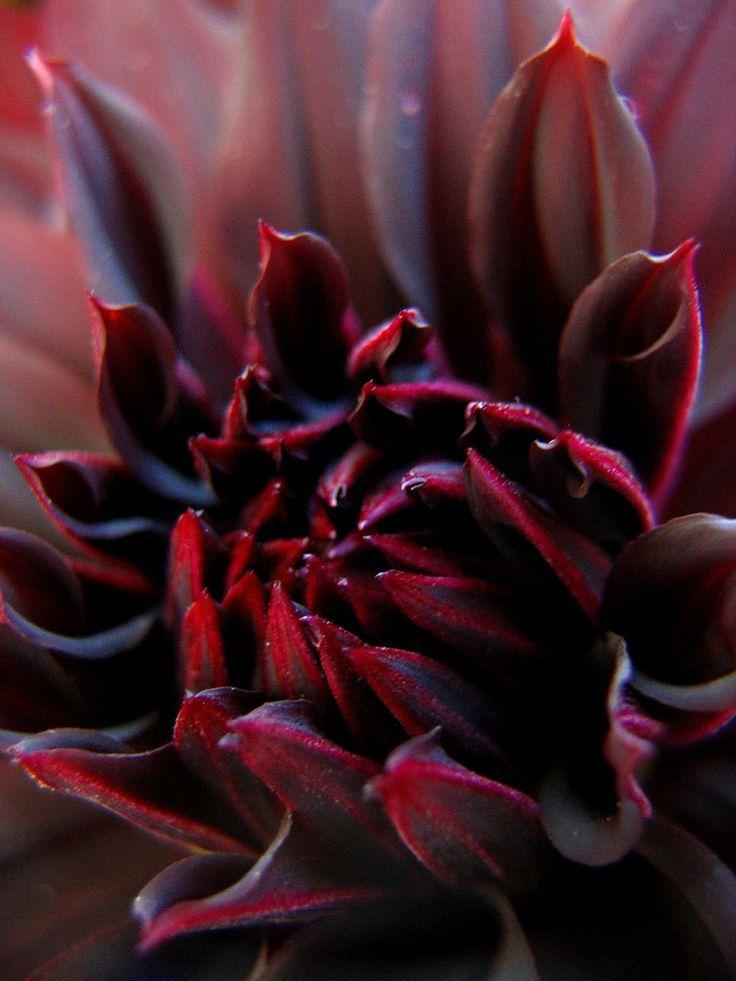 лучше удобнее коричневый цвет картинки цветы читай