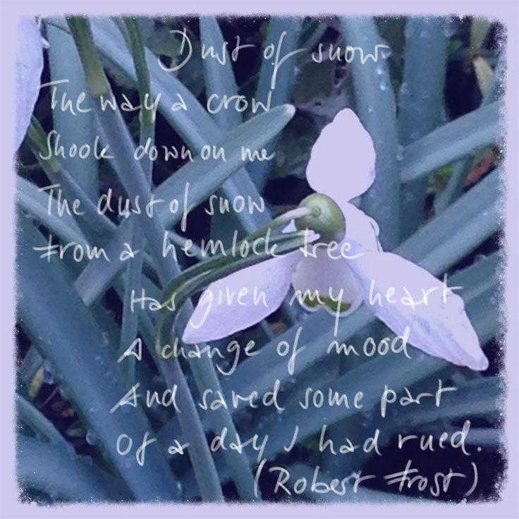 """""""Dust of snow"""" von Robert Frost. Ein kleines Pflänzchen Hoffnung..."""