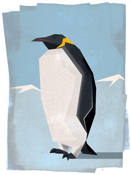 Birds - Simon Tibbs, Motion Graphic Designer