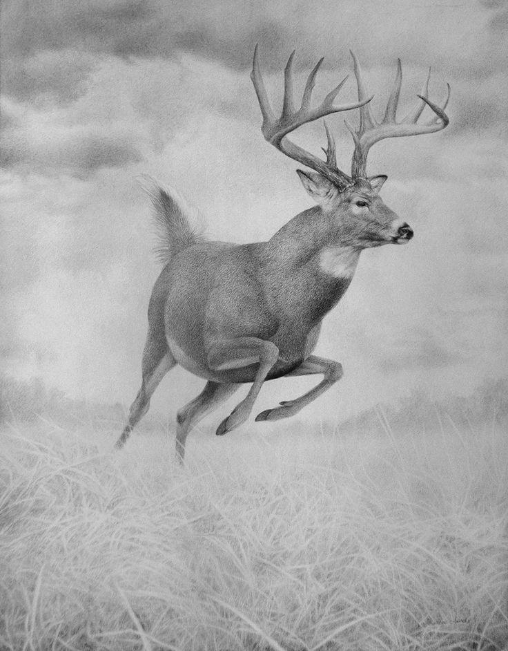 199 best deer sketches images on pinterest deer sketch
