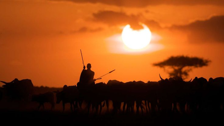 Kenya - A Week in the Masai Mara: Kicheche Special - Cattle Herder, #Kenya #Africa #Steppes It could be the sweeping plains, the flat topped acacias and the prolific #wildlife that call's this majestic landscape home. Then again it could be the breath taking sunsets or the soft, golden light that bathes the plains at the start of every day in the Mara. As with most magical places, it isn't one element that makes the Masai Mara so special.