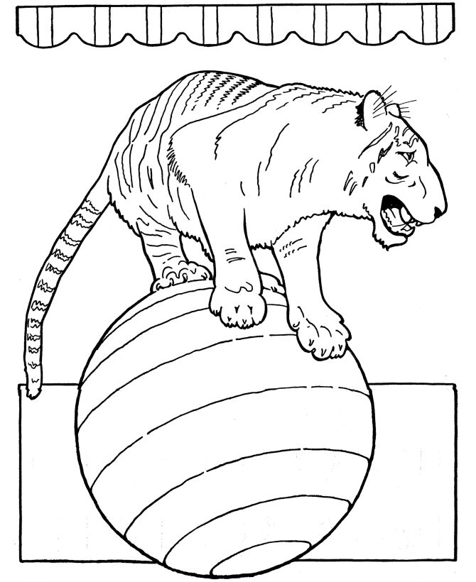 Circus Animal Coloring Page Trained Tiger Pages Featuring Lots Of Performing Animals And