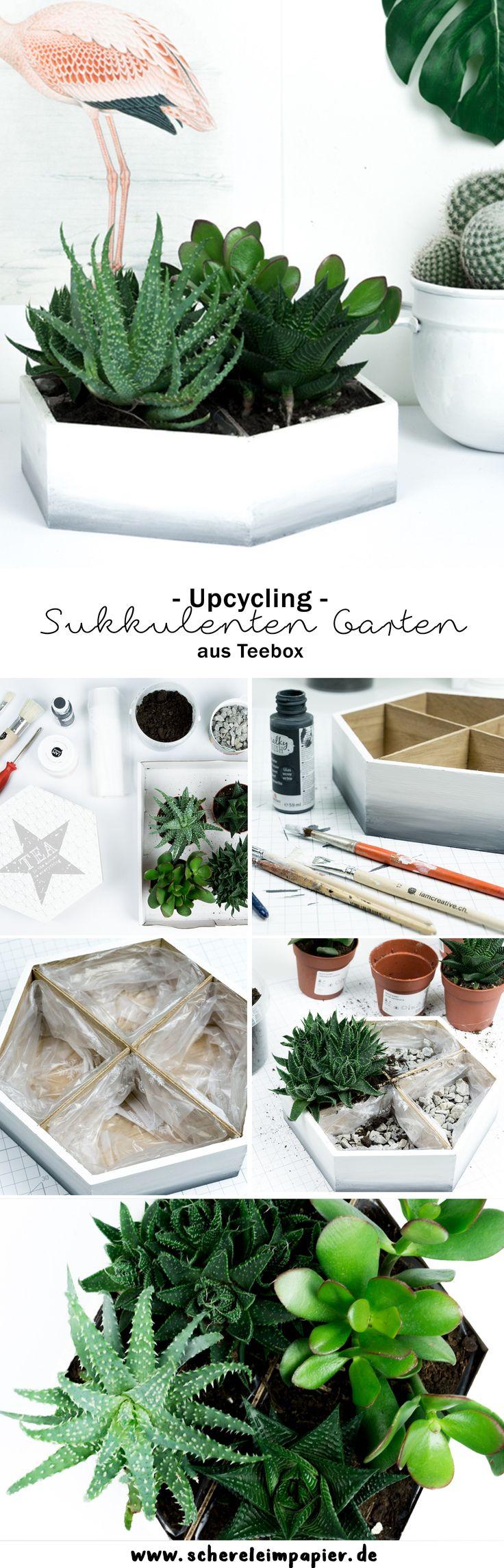 DIY Ombré Mini Sukkulenten Garten: Mit Meiner Upcycling Idee Zeige Ich  Euch, Wie Ihr