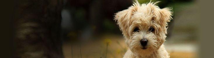 Residential Dog Training Lancashire - http://www.dog-ramblers.co.uk/dog-obedience-training-southport/ #MasterDogTrainingandSocializing