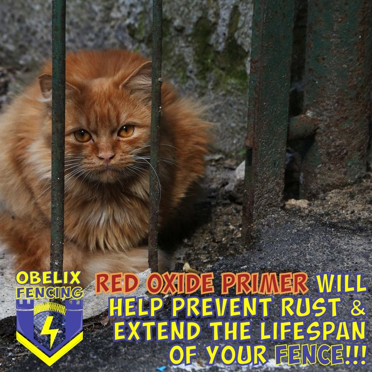 Red Oxide Primer will help prevent rust & extend the lifespan  of your Fence!!!  #rust #Durban #red #cat #lifespan #longlife #original #ObelixFencing #Obelix