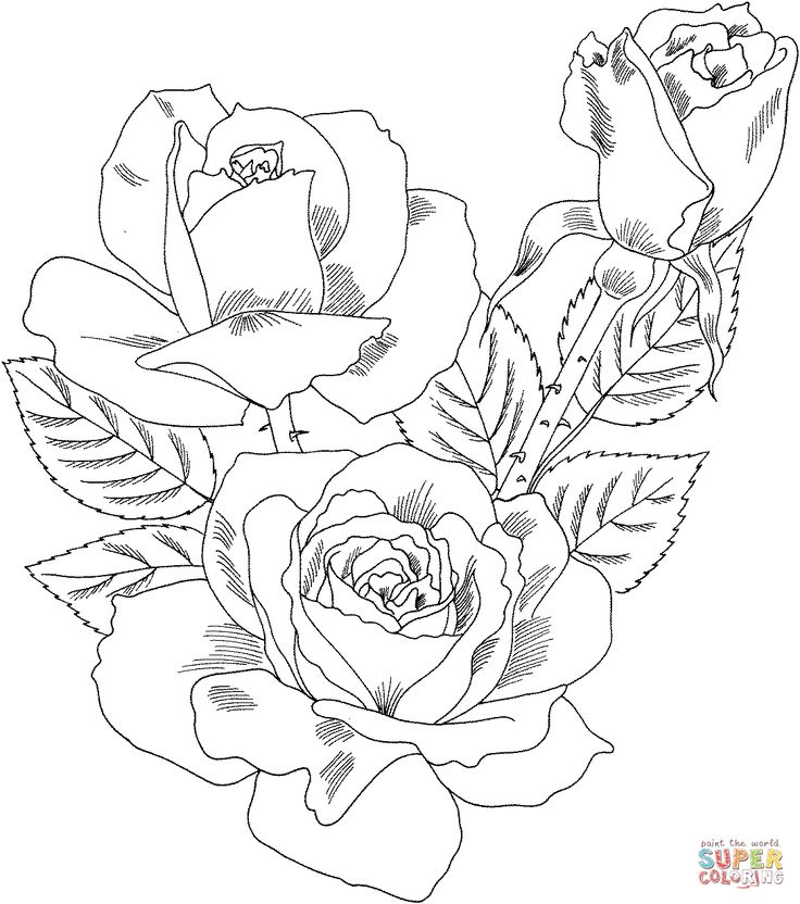 Double delight hybrid tea rose coloring page supercoloring com